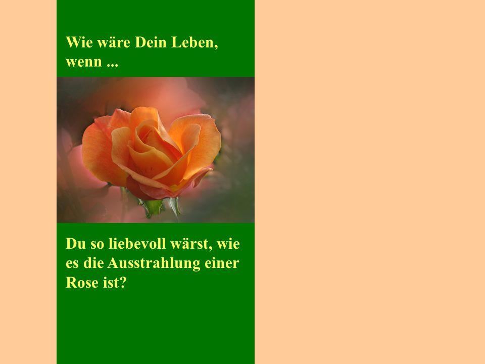Wie wäre Dein Leben, wenn... Du so liebevoll wärst, wie es die Ausstrahlung einer Rose ist?
