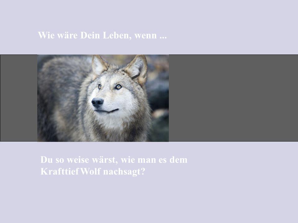 Wie wäre Dein Leben, wenn... Du so weise wärst, wie man es dem Krafttief Wolf nachsagt?