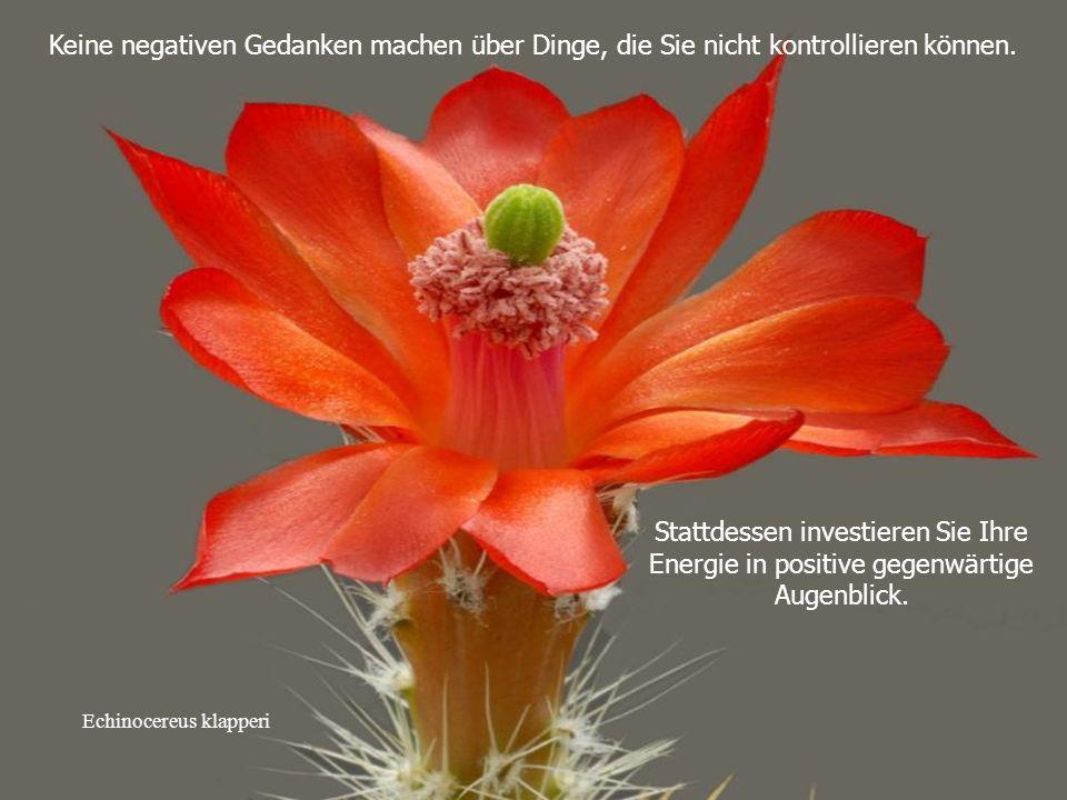 Mammillaria albiflora vergeuten Sie nicht ihre kostbare Zeit mit Klatsch und Tratsch