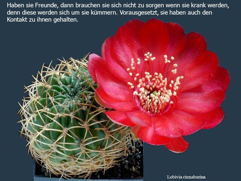 Ferobergia hybride Machen sie Frieden mit Ihrer Vergangenheit, damit sie sich nicht Ihren weiteren Lebensweg verderben.