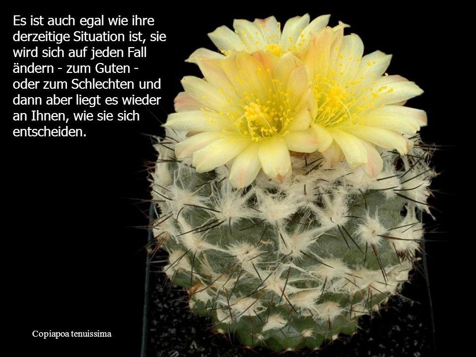 Mammillaria slevinii Was andere Leute über sie denken, ist nicht ihr Problem.