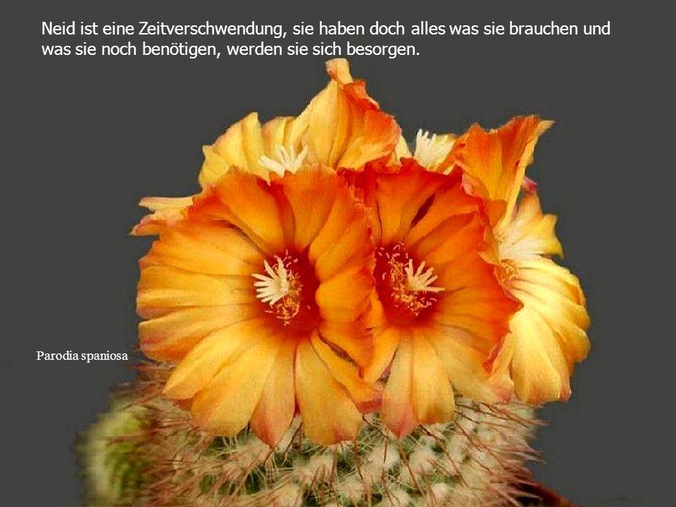 Ortegocactus macdougallii Befreien sie sich von Allem, was nicht nützlich ist und denken sie immer positiv.