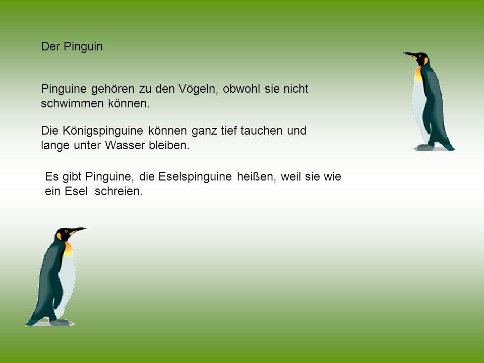 Der Pinguin Pinguine gehören zu den Vögeln, obwohl sie nicht schwimmen können. Die Königspinguine können ganz tief tauchen und lange unter Wasser blei