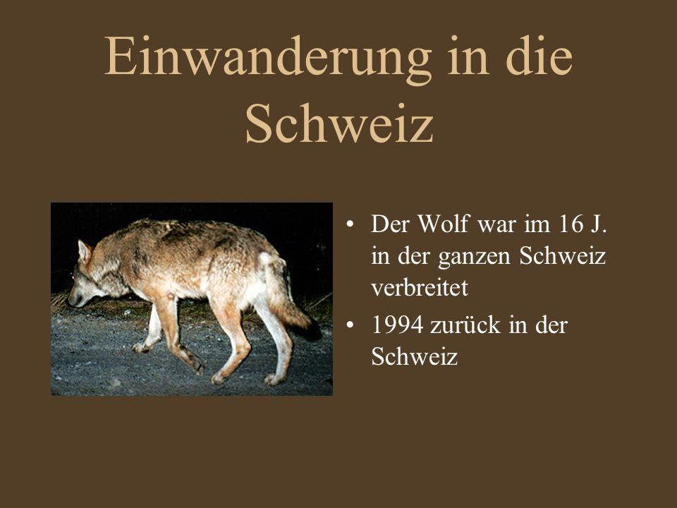 Einwanderung in die Schweiz Der Wolf war im 16 J. in der ganzen Schweiz verbreitet 1994 zurück in der Schweiz