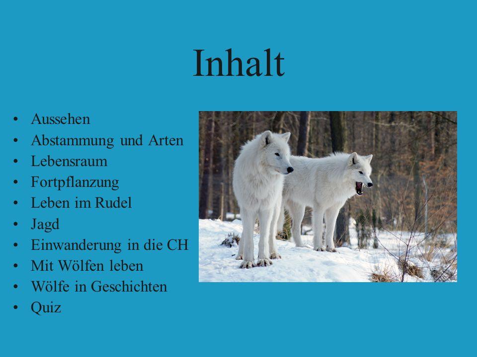 Inhalt Aussehen Abstammung und Arten Lebensraum Fortpflanzung Leben im Rudel Jagd Einwanderung in die CH Mit Wölfen leben Wölfe in Geschichten Quiz