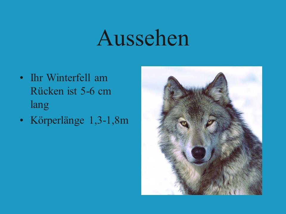 Aussehen Ihr Winterfell am Rücken ist 5-6 cm lang Körperlänge 1,3-1,8m