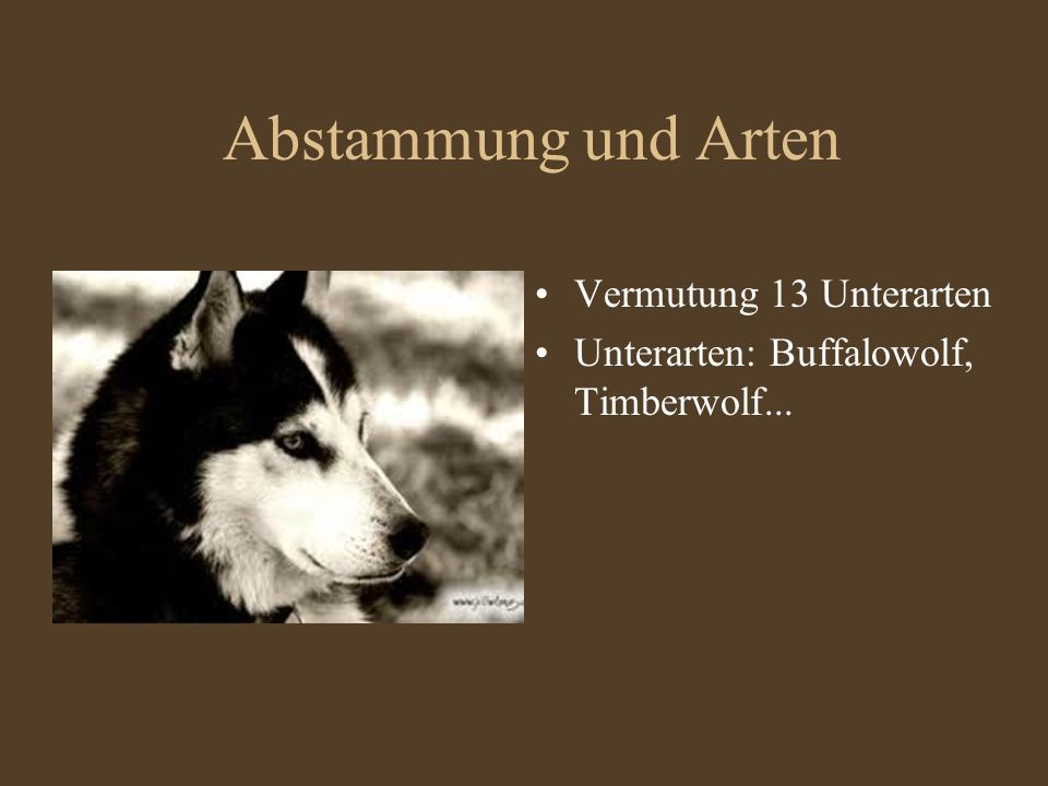 Abstammung und Arten Vermutung 13 Unterarten Unterarten: Buffalowolf, Timberwolf...