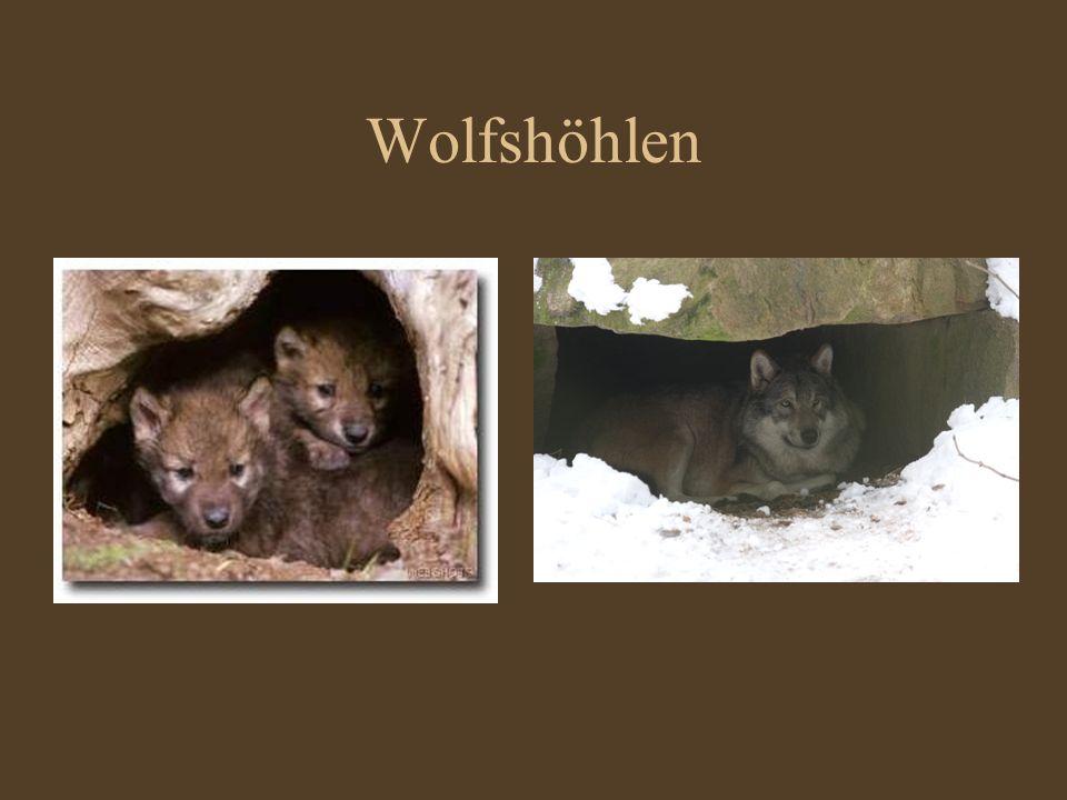 Wolfshöhlen