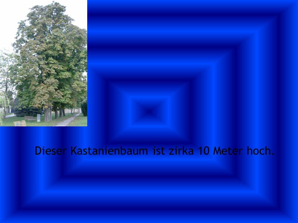 Der Nussbaum hat Nüsse im Sommer Der Nussbaum hat mehr als 200 Nüsse.