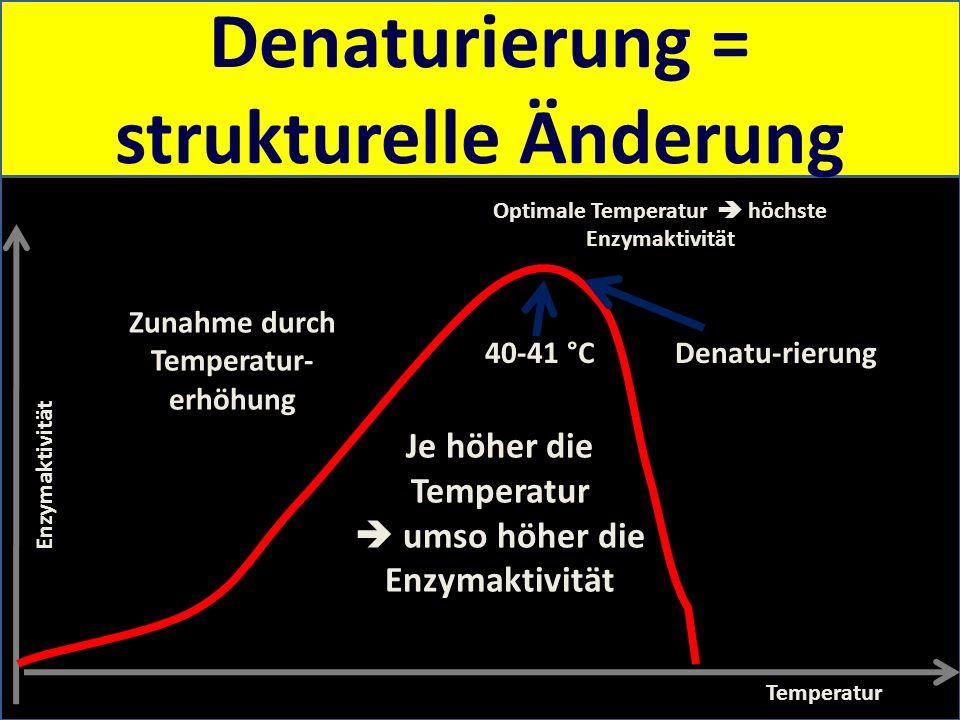 Temperatur, pH und Substratkonzentration haben eine Wirkung auf die Enzymaktivität Enzymaktivität Temperatur Optimale Temperatur höchste Enzymaktivitä