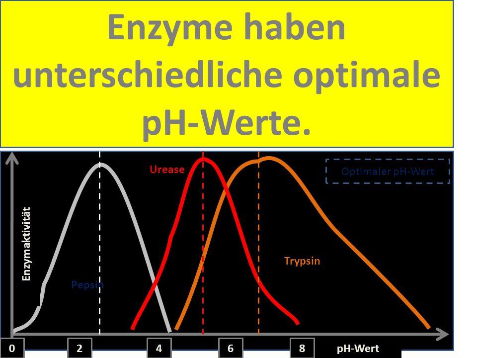 Temperatur, pH und Substratkonzentration haben eine Wirkung auf die Enzymaktivität pH-Wert 2468 Trypsin Urease Pepsin Enzymaktivität 0 Optimaler pH-We