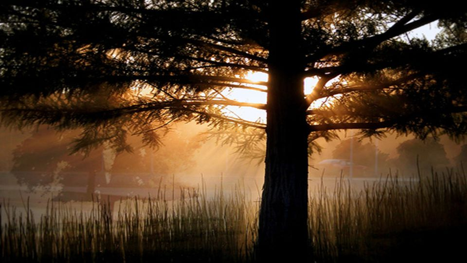 Doch langsam flimmert s durch den Nebel und plötzlich trifft ein Strahl der Sonne dich, leise ziehen weg die Nebelschleier.