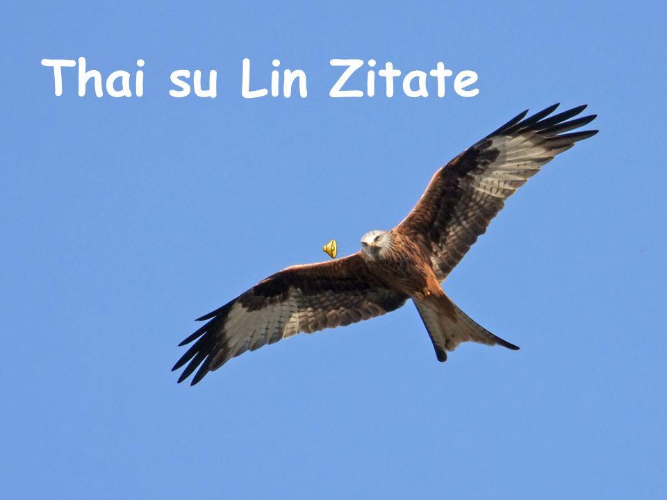 Thai su Lin Zitate