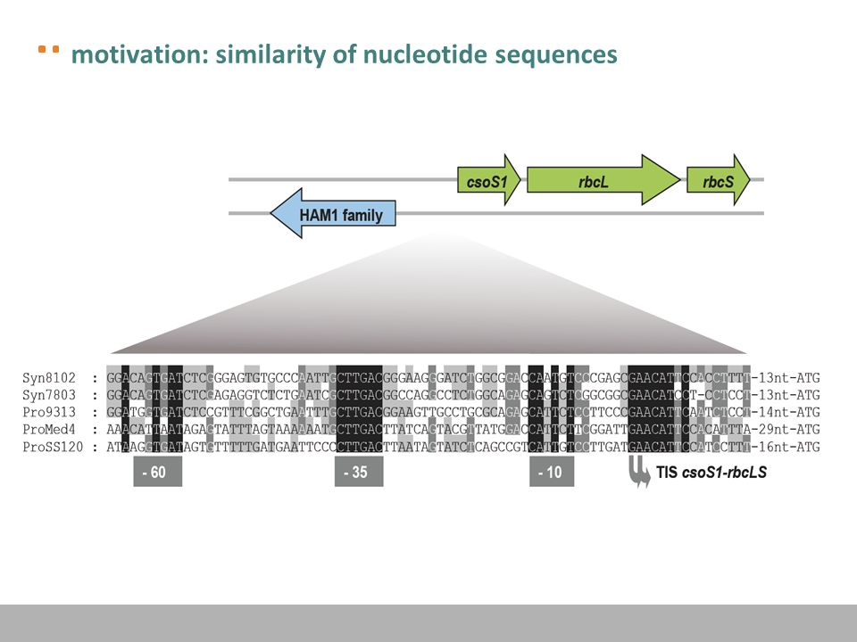 motivation: similarity of nucleotide sequences