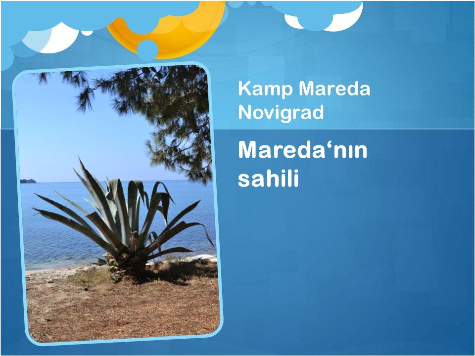 Kamp Mareda Novigrad Maredanın sahili