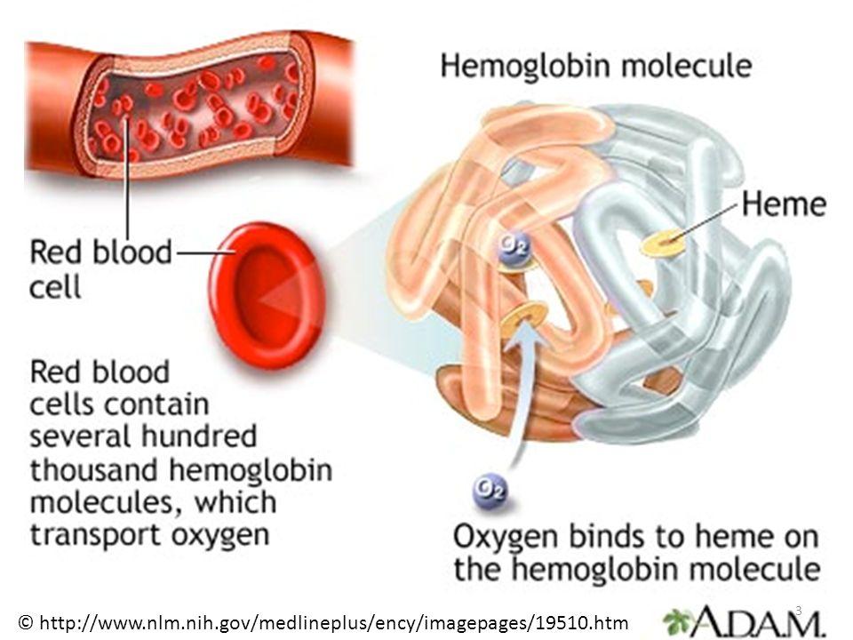 Geschichte Hämoglobin wurde bereits in 1840 von Hünefeld entdeckt Seine Struktur wurde als eine der ersten überhaupt von Max Perutz et al.