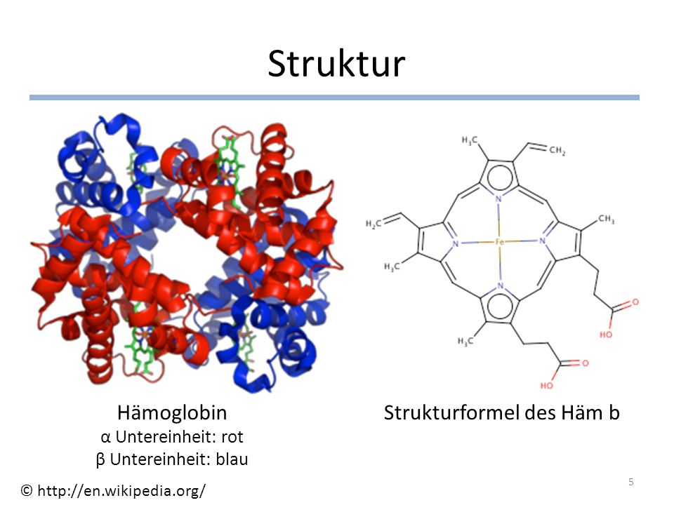 Struktur Hämoglobin α Untereinheit: rot β Untereinheit: blau Strukturformel des Häm b 5 © http://en.wikipedia.org/