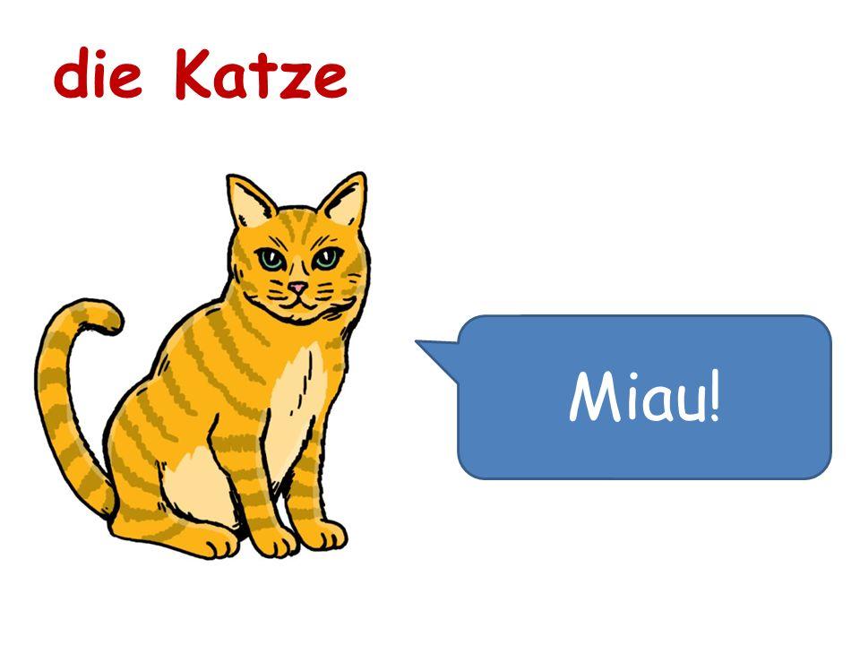 Miau! die Katze