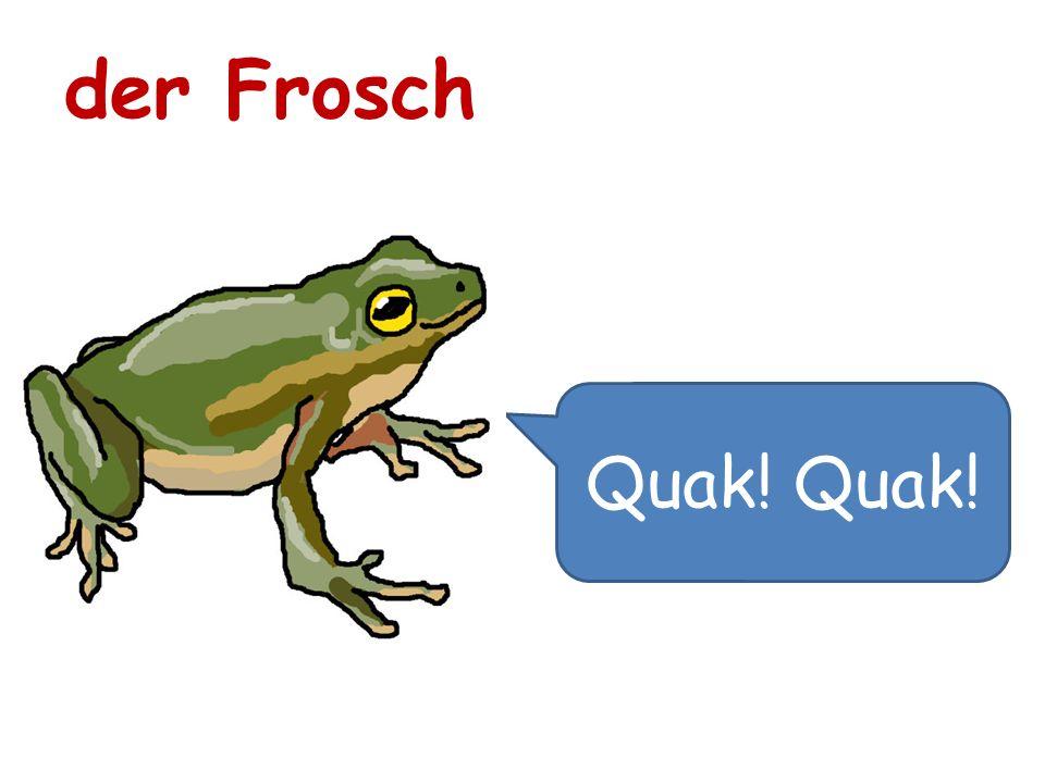 Quak! der Frosch