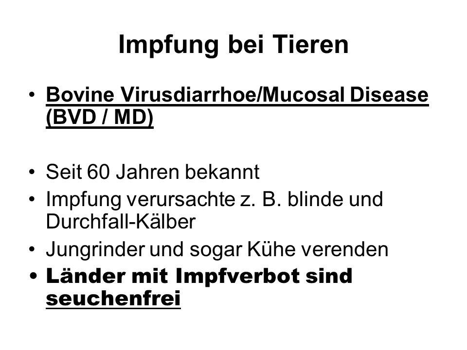 Impfung bei Tieren Bovine Virusdiarrhoe/Mucosal Disease (BVD / MD) Seit 60 Jahren bekannt Impfung verursachte z. B. blinde und Durchfall-Kälber Jungri