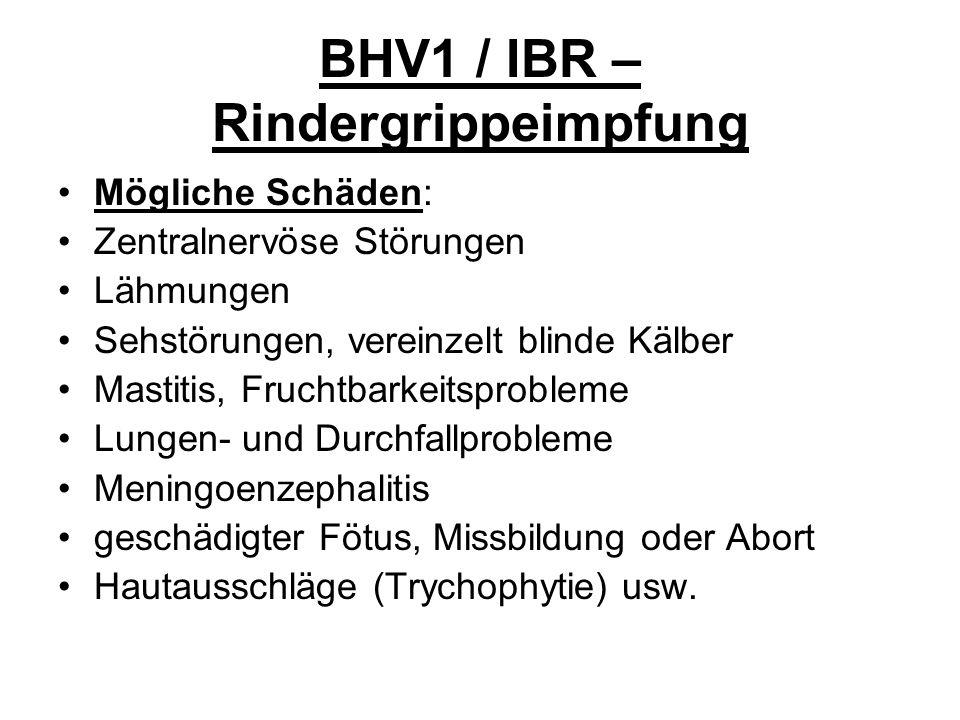 BHV1 / IBR – Rindergrippeimpfung Mögliche Schäden: Zentralnervöse Störungen Lähmungen Sehstörungen, vereinzelt blinde Kälber Mastitis, Fruchtbarkeitsp