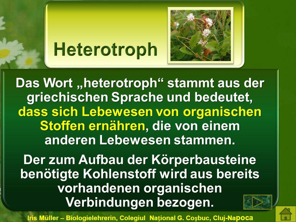 Das Wort heterotroph stammt aus der griechischen Sprache und bedeutet, dass sich Lebewesen von organischen Stoffen ernähren, die von einem anderen Lebewesen stammen.