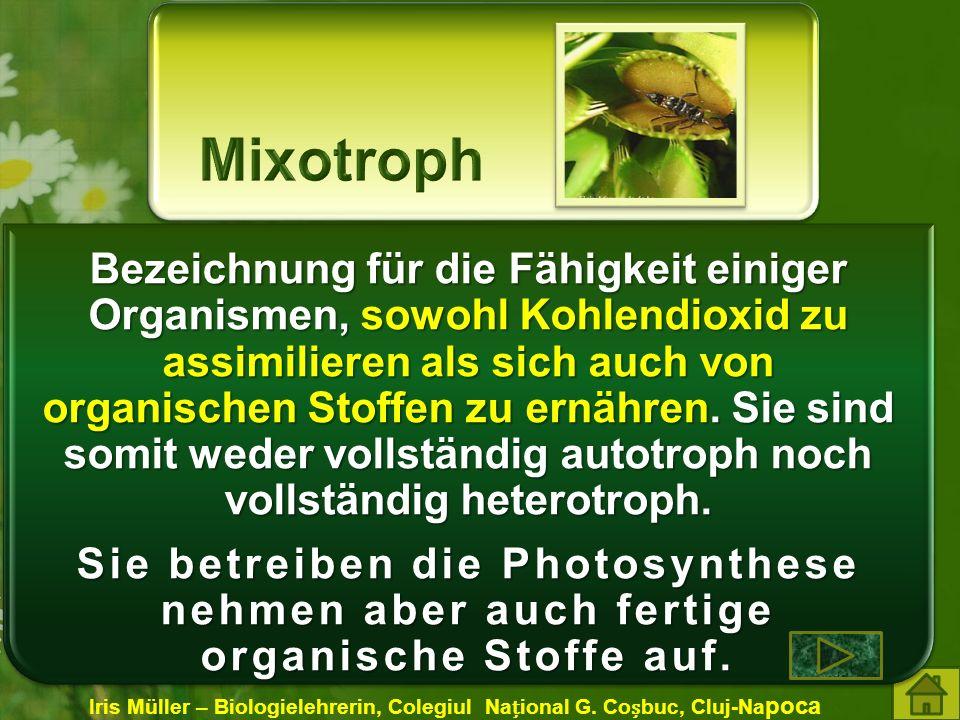 Bezeichnung für die Fähigkeit einiger Organismen, sowohl Kohlendioxid zu assimilieren als sich auch von organischen Stoffen zu ernähren.