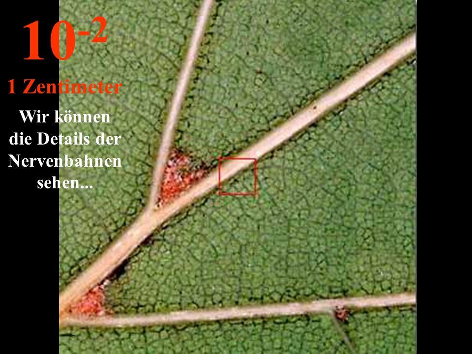 http://wissenschaft3000.wordpress.com/ Das ist ein Eichenblatt 10 -1 10 Zentimeter