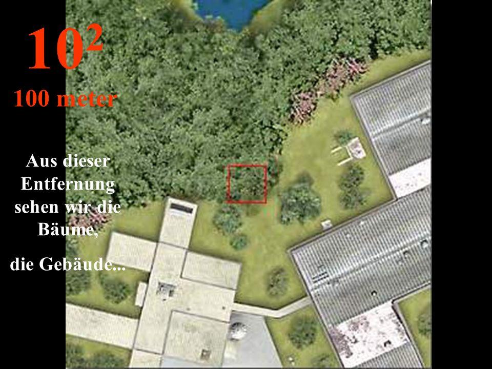 http://wissenschaft3000.wordpress.com/ Die Reise beginnt: wir entfernen uns von den schönen Blättern und sehen die Bäume... 10 1 10 meter