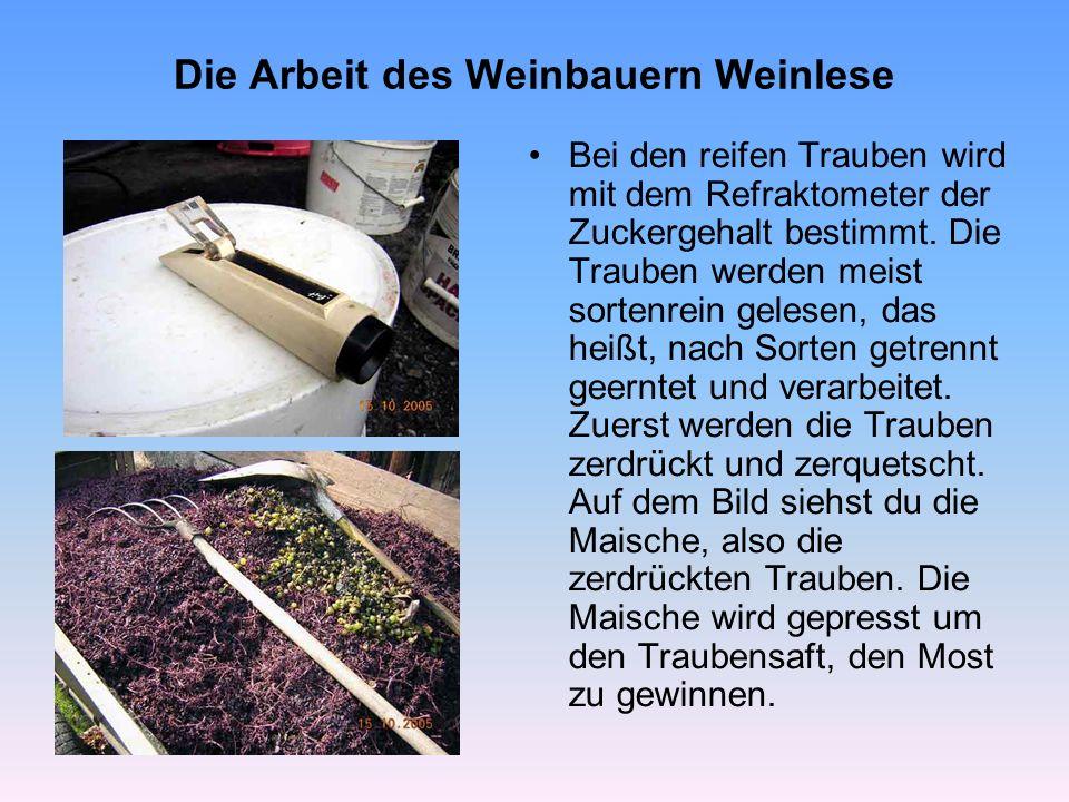 Die Arbeit des Weinbauern Weinlese Bei den reifen Trauben wird mit dem Refraktometer der Zuckergehalt bestimmt. Die Trauben werden meist sortenrein ge
