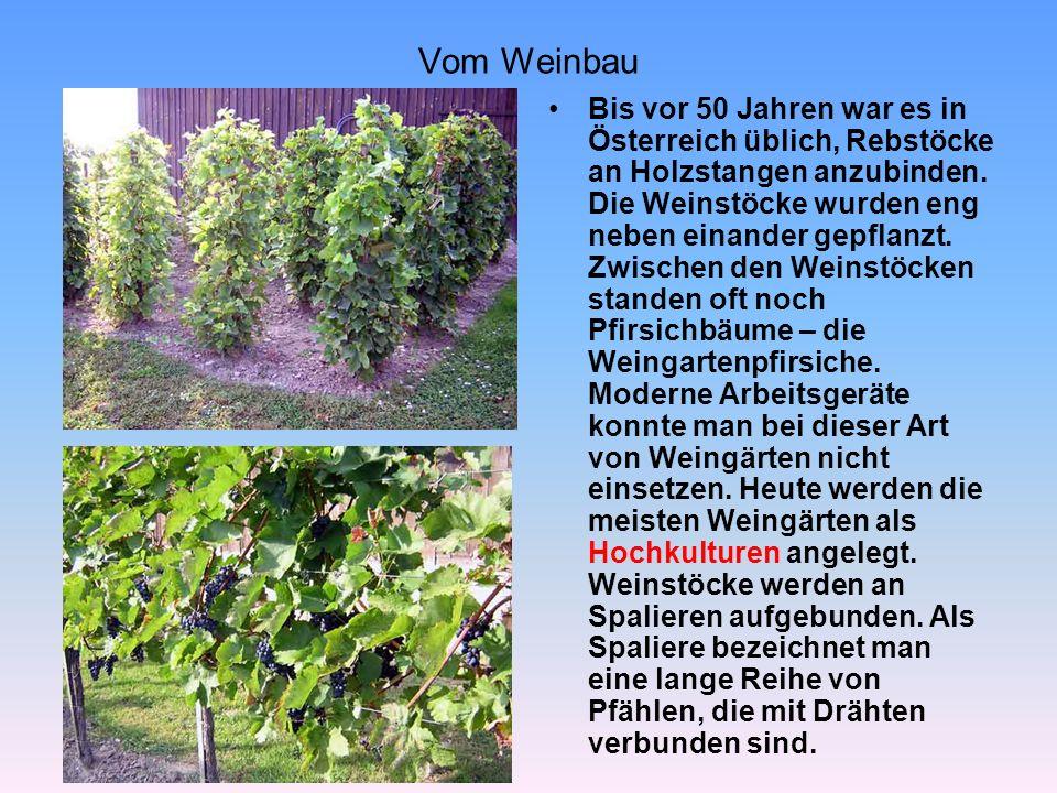Wo Wein gut wächst Wein Wächst nicht überall.Der Wein braucht viel Sonne und relativ wenig Regen.