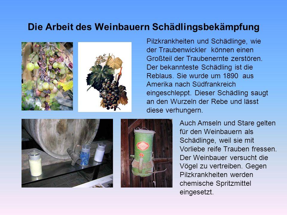 Die Arbeit des Weinbauern Schädlingsbekämpfung Pilzkrankheiten und Schädlinge, wie der Traubenwickler können einen Großteil der Traubenernte zerstören