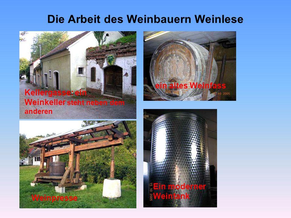 Die Arbeit des Weinbauern Weinlese Bei den reifen Trauben wird mit dem Refraktometer der Zuckergehalt bestimmt.