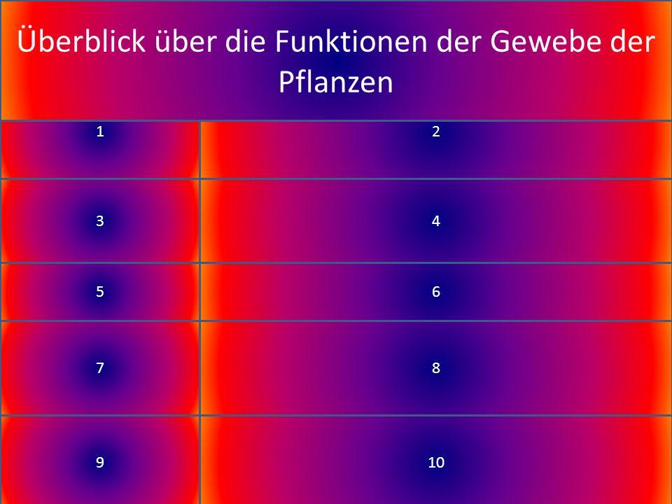 Gewebe / Teil der Pflanze Funktion Cuticula; Stomata Wasserkonservierung; Regelung Wasserabgabe Leitbündel Festigkeit (Stützzellen) und Transport von Wasser (Xylem) und Nährstoffen (Phloem) Stomata Aufnahme von CO 2 und Abgabe von O 2 Palisaden- gewebe Lichtabhänge Reaktionen der Fotosynthese (Chlorophyll) Schwamm- gewebe Wasserspeicherort & Gasaustausch zwischen Geweben 910 12 34 56 78 Überblick über die Funktionen der Gewebe der Pflanzen