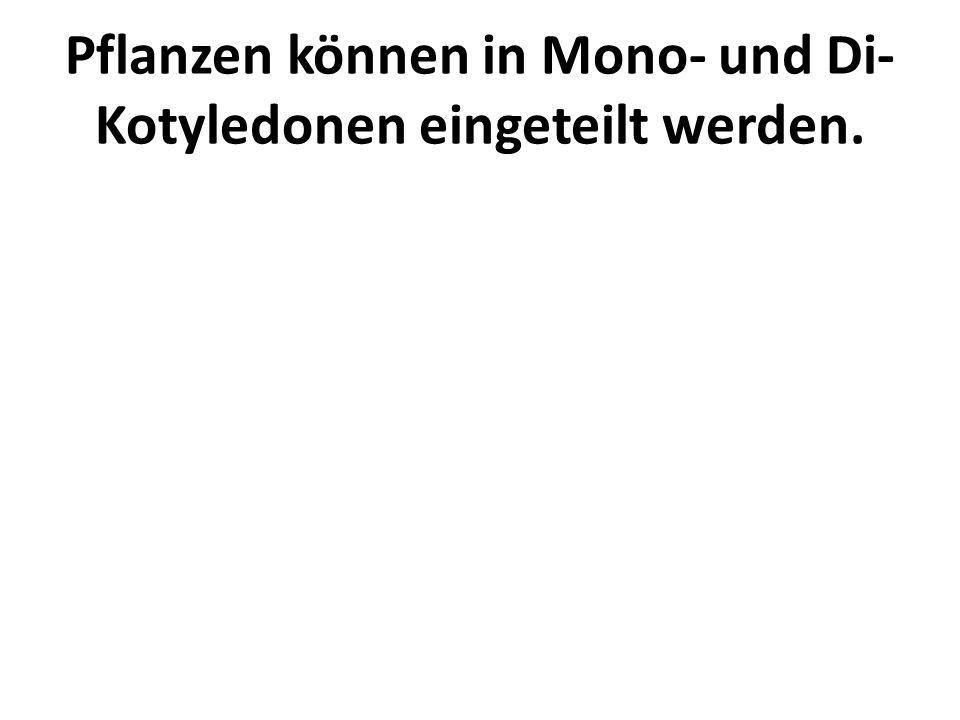 Pflanzen können in Mono- und Di- Kotyledonen eingeteilt werden.
