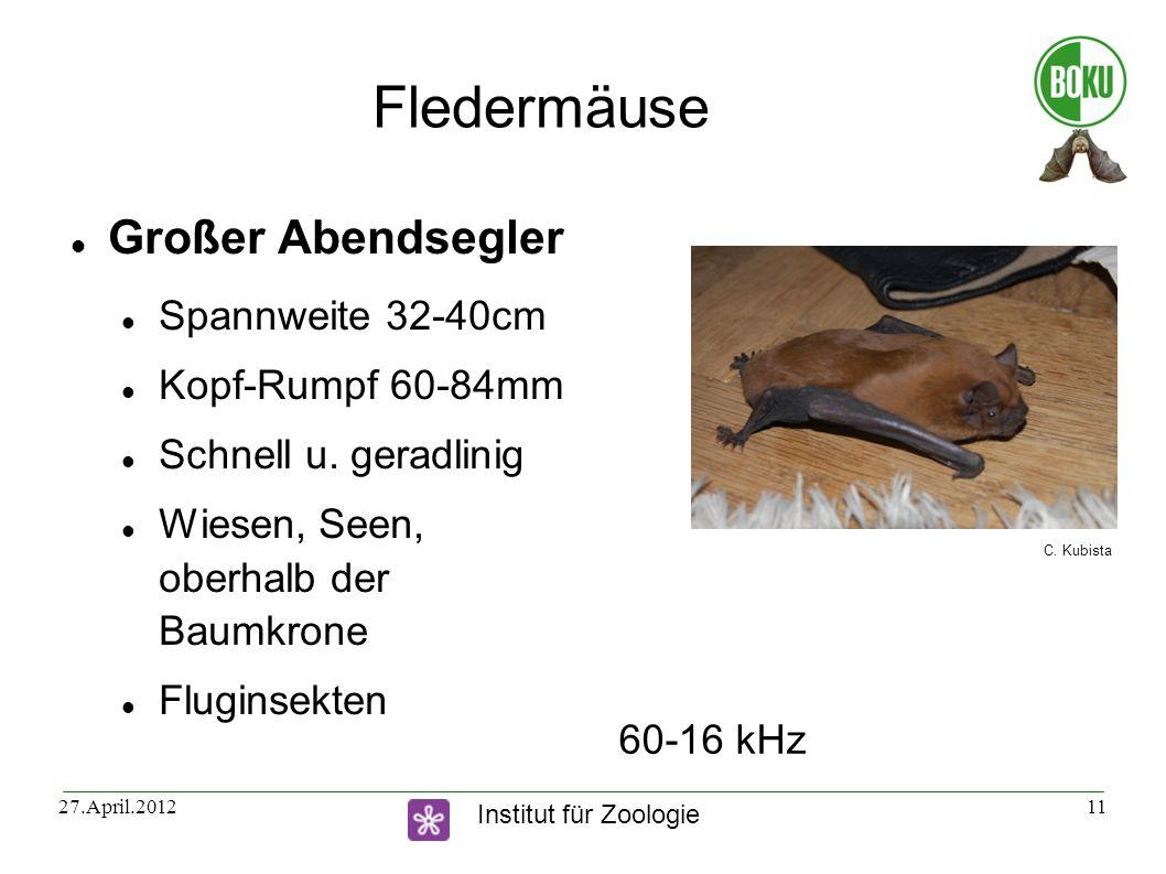 Institut für Zoologie 27.April.201211 Fledermäuse Großer Abendsegler Spannweite 32-40cm Kopf-Rumpf 60-84mm Schnell u. geradlinig Wiesen, Seen, oberhal