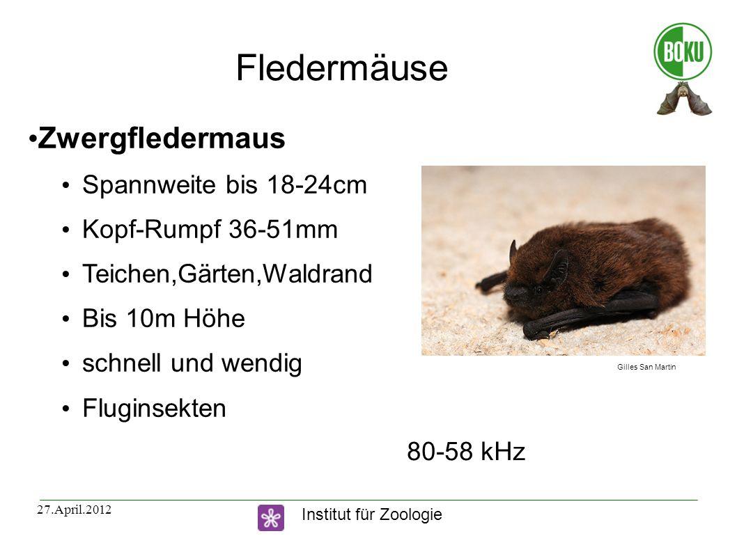 Institut für Zoologie 27.April.2012 Fledermäuse Zwergfledermaus Spannweite bis 18-24cm Kopf-Rumpf 36-51mm Teichen,Gärten,Waldrand Bis 10m Höhe schnell