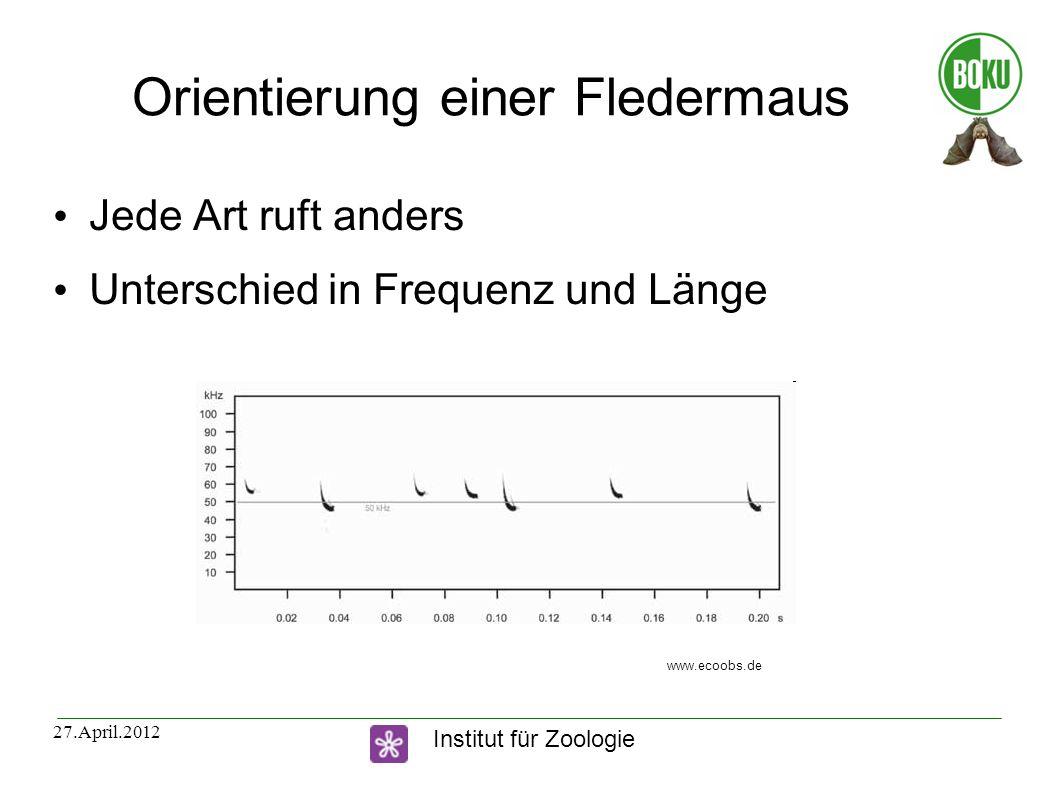 Institut für Zoologie 27.April.2012 Orientierung einer Fledermaus Jede Art ruft anders Unterschied in Frequenz und Länge www.ecoobs.de