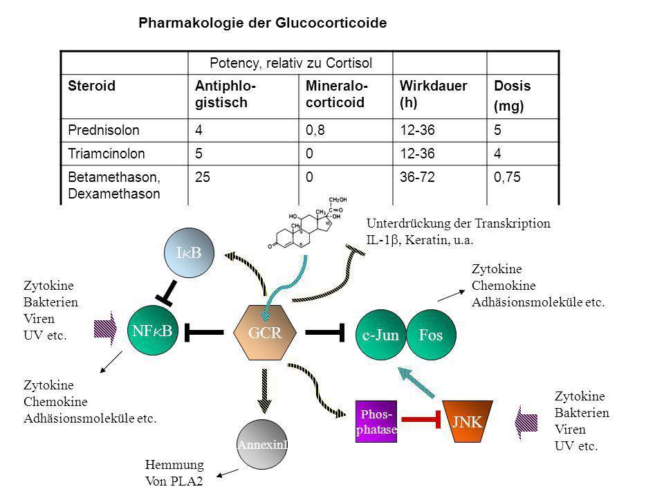 c-Jun GCR NF B AnnexinI Phos- phatase JNK I B Fos Unterdrückung der Transkription IL-1, Keratin, u.a.