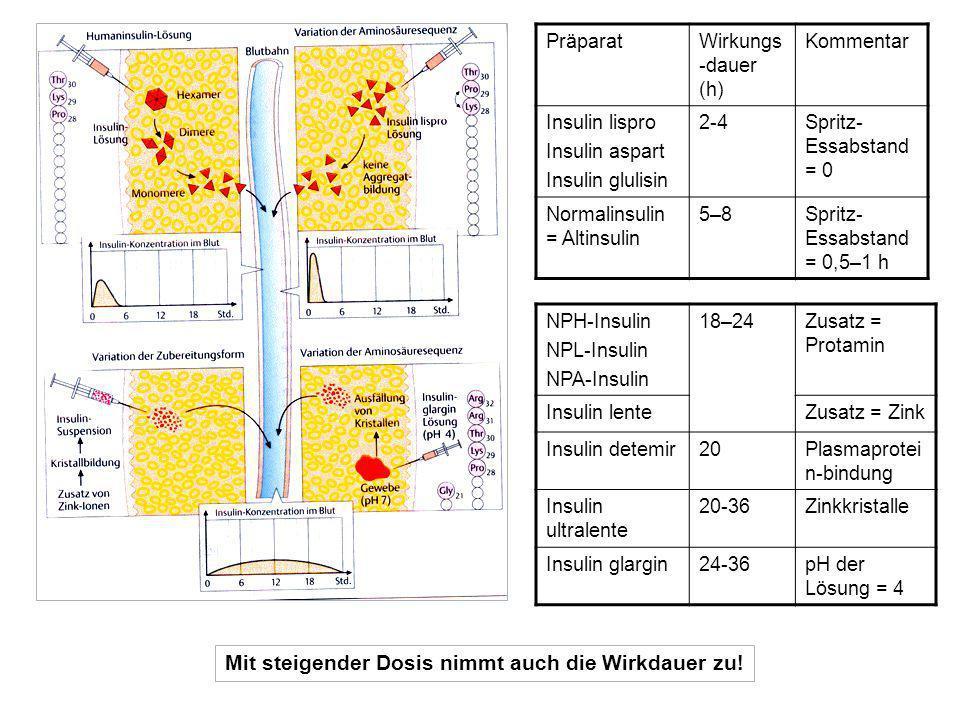 PräparatWirkungs -dauer (h) Kommentar Insulin lispro Insulin aspart Insulin glulisin 2-4Spritz- Essabstand = 0 Normalinsulin = Altinsulin 5–8Spritz- Essabstand = 0,5–1 h NPH-Insulin NPL-Insulin NPA-Insulin 18–24Zusatz = Protamin Insulin lenteZusatz = Zink Insulin detemir20Plasmaprotei n-bindung Insulin ultralente 20-36Zinkkristalle Insulin glargin24-36pH der Lösung = 4 Mit steigender Dosis nimmt auch die Wirkdauer zu!