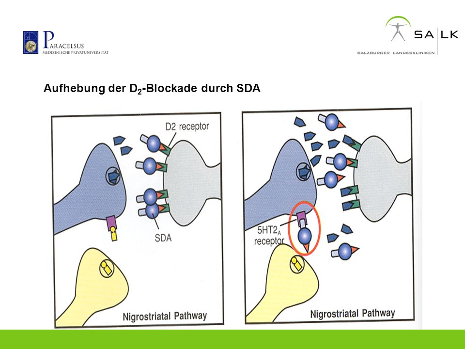 Aufhebung der D 2 -Blockade durch SDA
