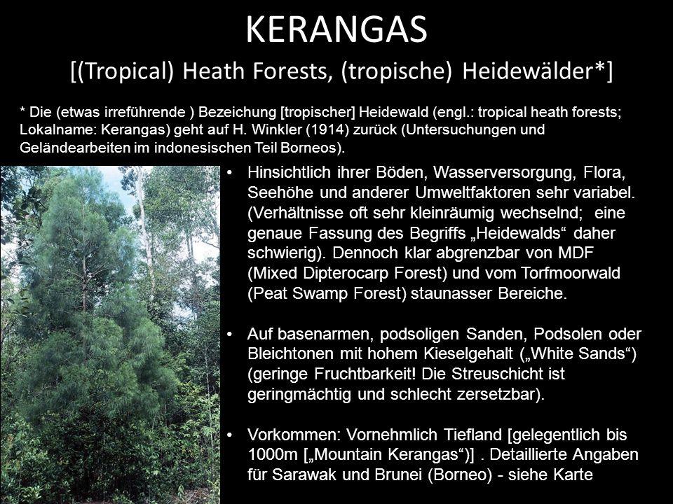 Mountain Kerangas KERANGAS: Mountain Kerangas (Maliau Basin, Sabah, Borneo)