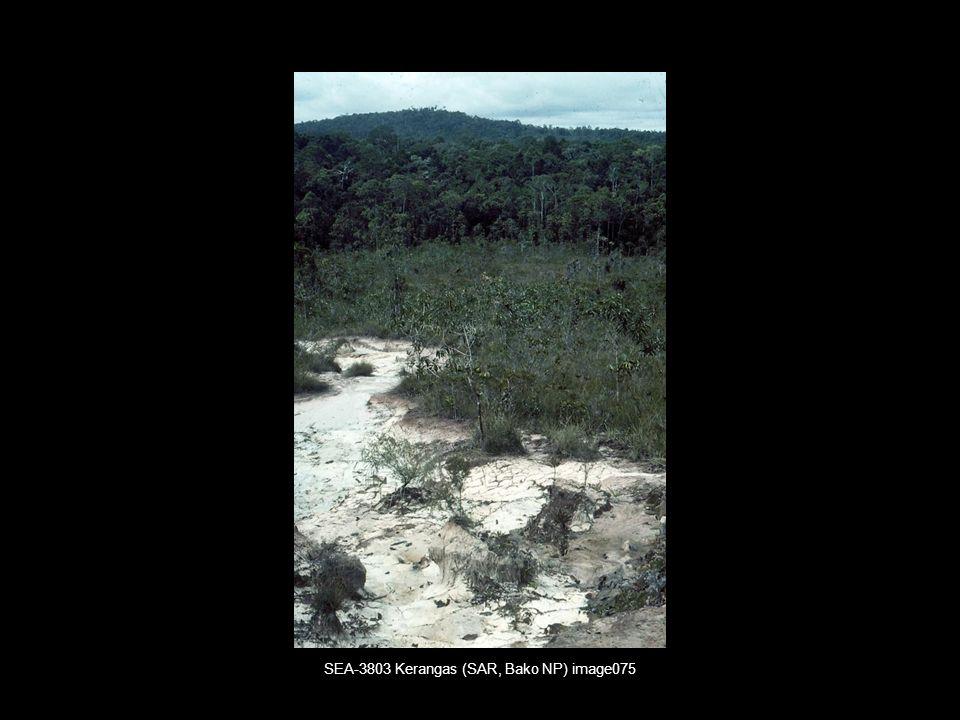Vorkommen und Verteilung von Kerangas und Peat Swamp Forests (Torfmoorwäldern) in Sarawak und Brunei (Borneo)* (Brünig 1991: Fig.