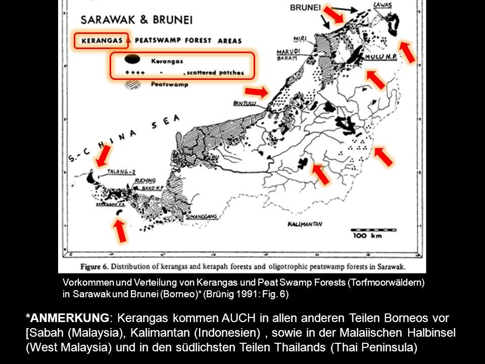 WuchsformenArtenanteil Megaphanaerophyten 70 % Mikrophanerophyten 10 % Lianen 5 % Epiphyten< 10 % Chamaephyten< 10 % KERANGAS: Lebens- und Wuchsformen Anteil der Wuchsformentypen an der Gesamtvegetation der Heidewälder (basierend auf Untersuchungen in Sarawak und Brunei; Brünig 1968*) Wie in allen tropischen Regenwäldern dominiert die Wuchsform der Makrophanerophyten bei weitem.