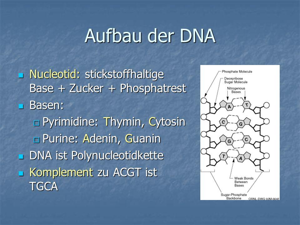 Aufbau der DNA Nucleotid: stickstoffhaltige Base + Zucker + Phosphatrest Nucleotid: stickstoffhaltige Base + Zucker + Phosphatrest Basen: Basen: Pyrim