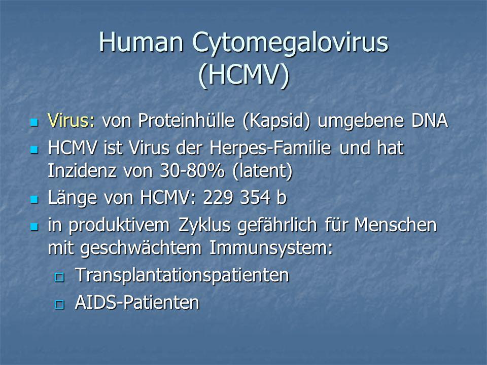 Human Cytomegalovirus (HCMV) Virus: von Proteinhülle (Kapsid) umgebene DNA Virus: von Proteinhülle (Kapsid) umgebene DNA HCMV ist Virus der Herpes-Fam