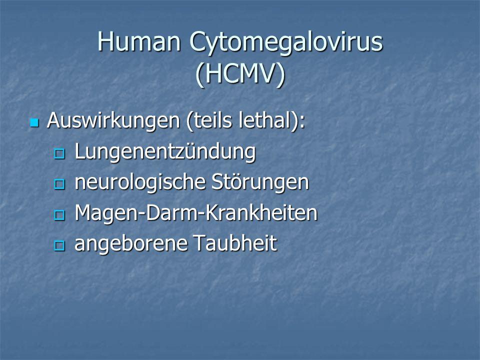 Human Cytomegalovirus (HCMV) Auswirkungen (teils lethal): Auswirkungen (teils lethal): Lungenentzündung Lungenentzündung neurologische Störungen neuro