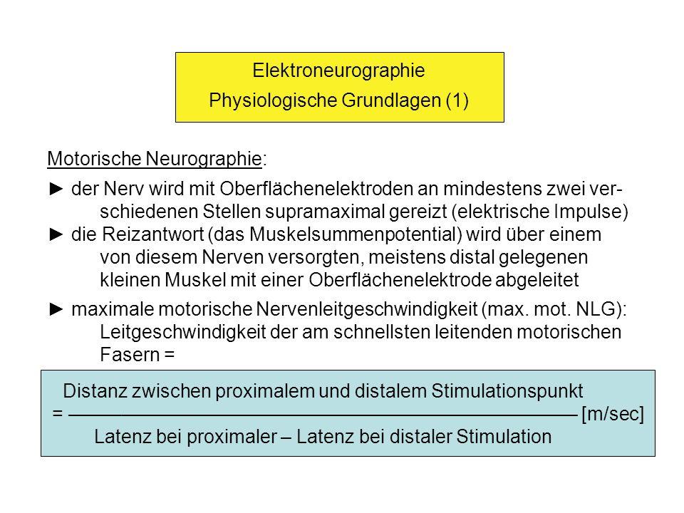 Elektroneurographie Physiologische Grundlagen (2) Summenpotentialamplitude (SPA) [mV] distale Latenz: Latenzzeit zwischen der distalen Reizung und dem Auftreten des Muskelsummenpotentials [msec]; die distale La- tenz setzt sich aus der NLG und der Zeit für die neuromusku- läre Übertragung zusammen
