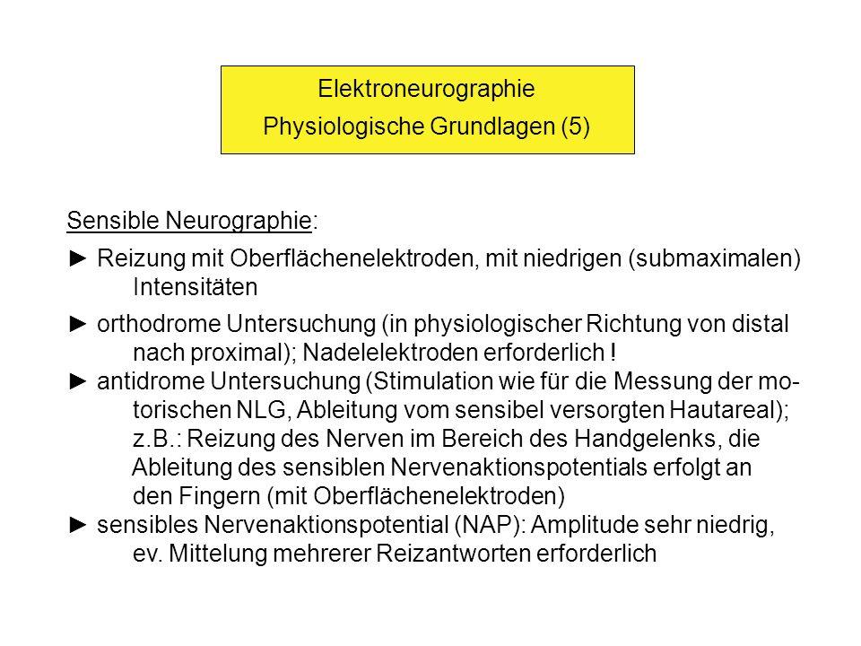 Elektroneurographie Physiologische Grundlagen (6) Bestimmung der F-Wellen-Latenz: die Stimulation eines motorischen Nerven führt auch zu einer anti- dromen Erregung der proximal gelegenen Abschnitte bis zu den motorischen Vorderhorn-Ganglienzellen; von dort wird die Erregung wieder in den peripheren Nerven zurückgeleitet; am Muskel tritt im Anschluß an die erste (direkte) Erregungswelle nach einer gewissen Latenz noch eine zweite Erregungswelle (F-Welle) ein Nachweis von weit proximal gelegenen Leitungsstörungen im Be- reich der Plexus bzw.