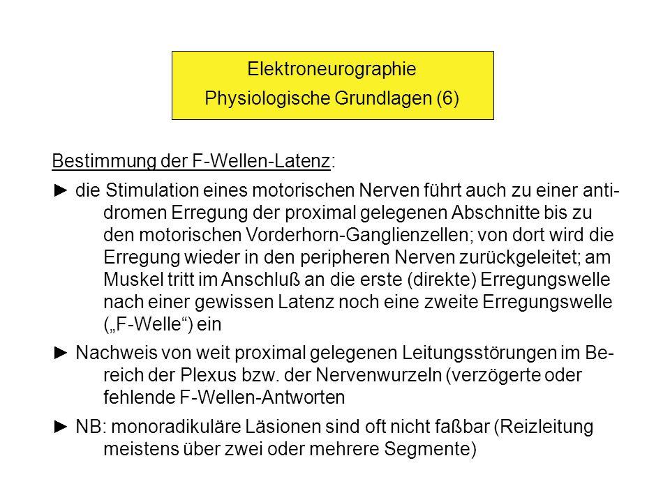 Elektroneurographie Physiologische Grundlagen (6) Bestimmung der F-Wellen-Latenz: die Stimulation eines motorischen Nerven führt auch zu einer anti- d